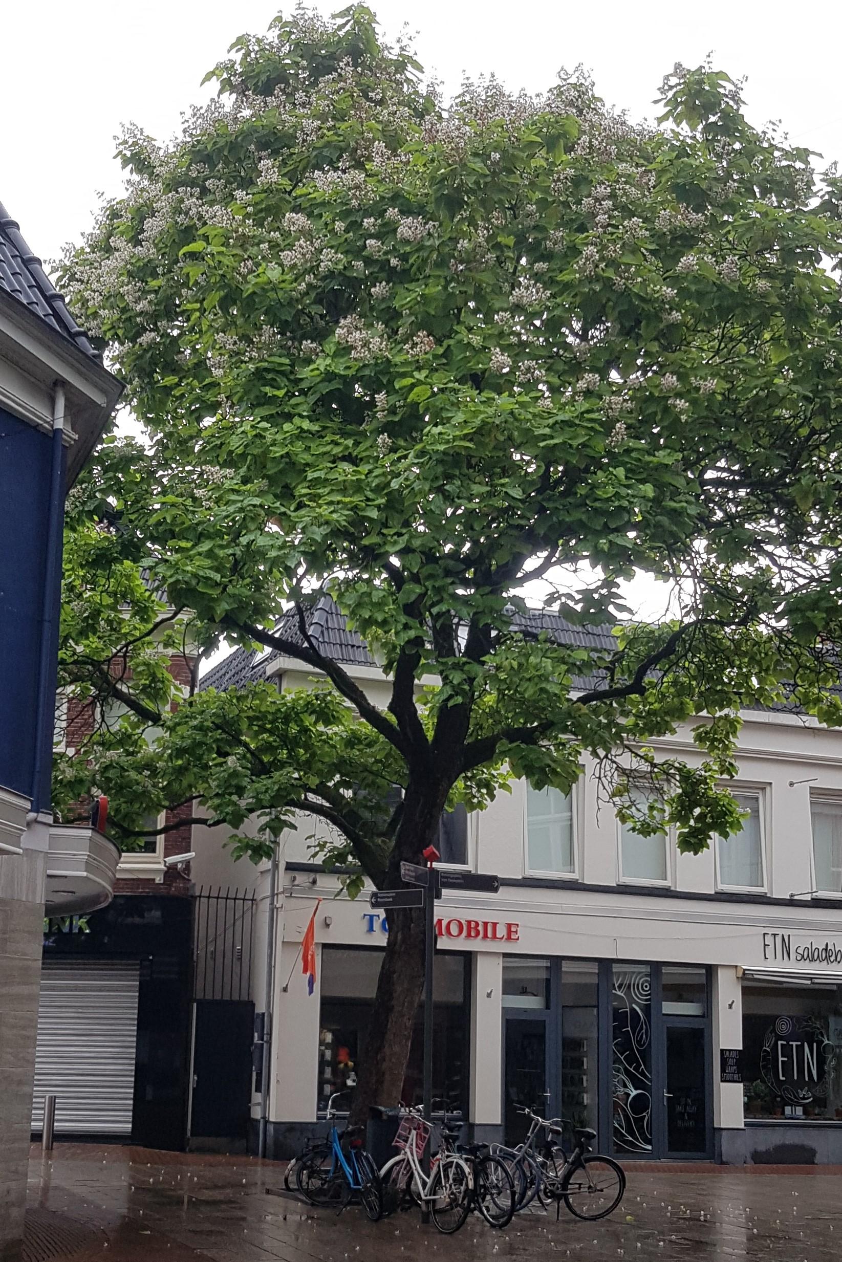20200701 boom in binnenstad
